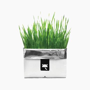 未卡Vetreska 网红款有机无土环保纸燕麦猫草80g 小图 (0)