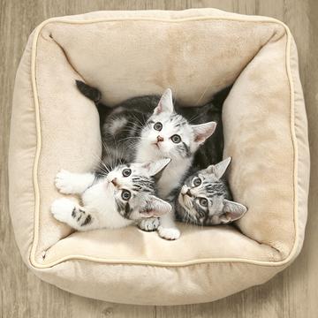 猫乐适 基础猫窝 耐抓耐挠 柔软亲肤 小图 (0)